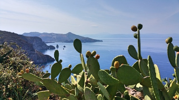 Sicilia fichi d'india