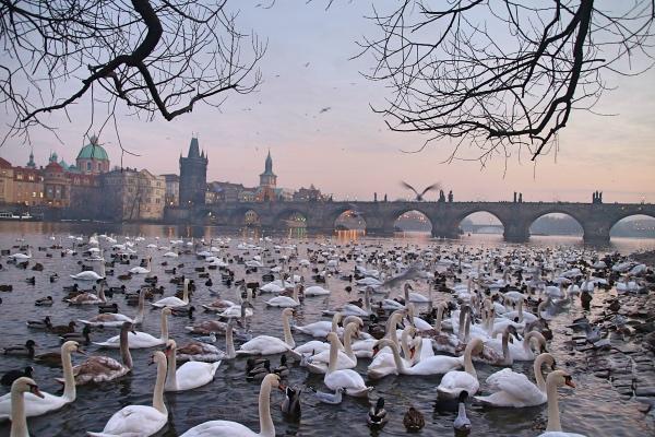 Consigli pratici per visitare Praga | Via col viaggio
