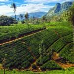 Sri Lanka, l'isola verde