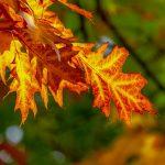 Dove ammirare il foliage negli Stati Uniti